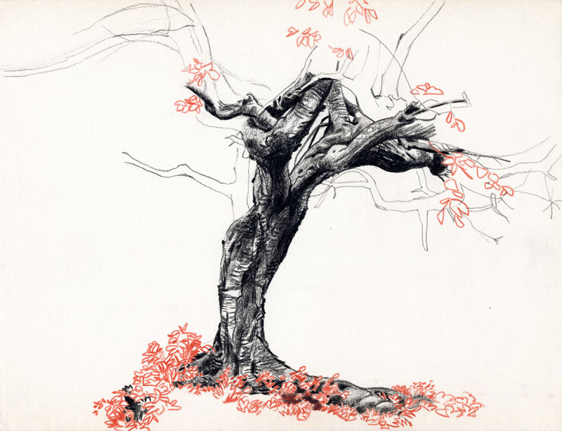 Alberi Disegno A Matita.Come Disegnare Un Albero Di Ciliegio